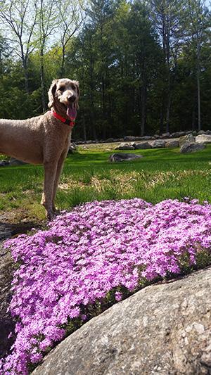 Friday Favorites spring flowers