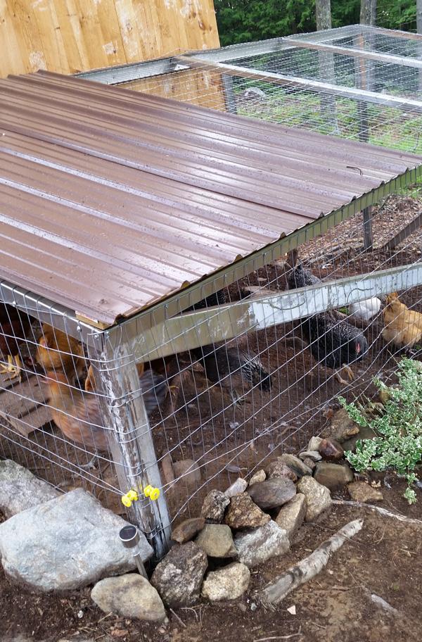 chicken coop updates roof