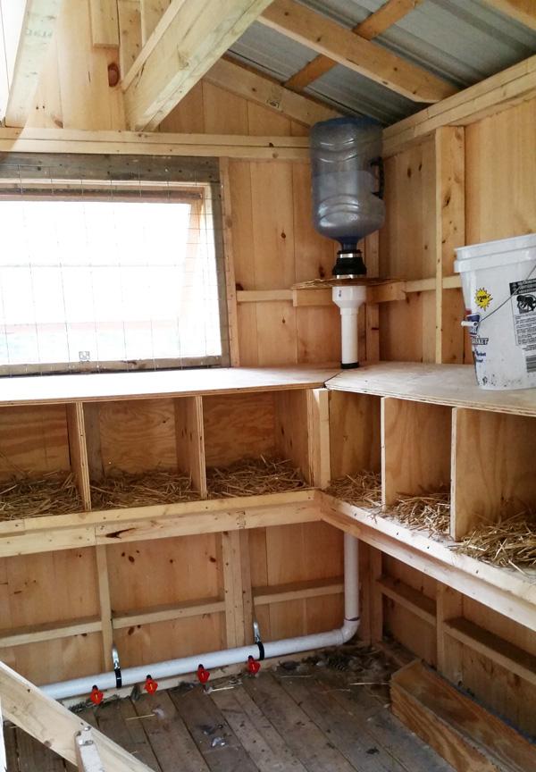 chicken coop updates water feeder