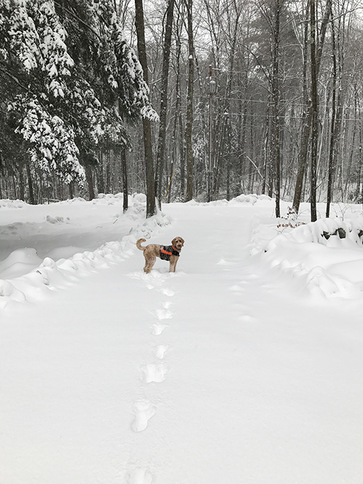 jett-snowstorm