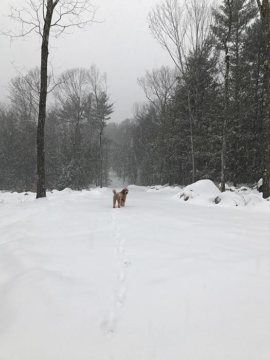 snow storm jett2
